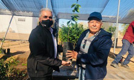 ENTREGAN PRIMEROS ÁRBOLES DE LIMÓN AMARILLO EN VALLE DE MEXICALI